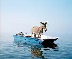 donkey on a boat near the island Alicudi, Italy by Paola Pivi #filicudi #sicilia #sicily