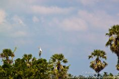 #crane #Kranich #travel #animals