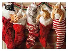 10 Awesome Cat Christmas Cards | Cat Lady Confidential