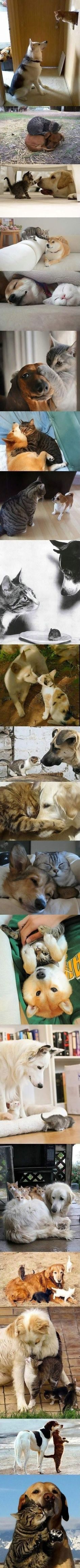 best dogs u cats images on pinterest in fluffy animals