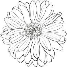 Chrysanthemum 3 ~ Renior  Spider Chrysanthemum Drawing