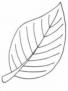 Leaf Coloring Pages Free Download Leaf Coloring Page Printable Leaves Tree Coloring Page