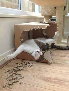 Katteneigenaars zullen het zeker herkennen: geen enkele kat kan aan een kartonnen doos weerstaan. Groot of klein, geen enkele doos is veilig als er een kat in de buurt is. Wij hebben ons altijd afgevraagd hoe dat komt, en kijk eens aan: ook wetenschappers vonden die vraag boeiend genoeg om er studies aan te wijden. …