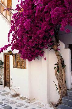 Mykonos island, Greece.