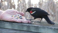 How to Help Wild Birds Survive the Winter