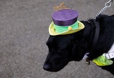 ladies day at ascot : Zoey the dog