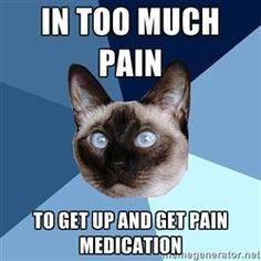 Chronic Illness Cat - in too much pain to get up and get pain medication