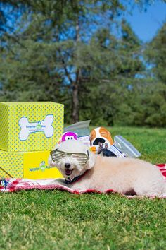 This adorable pup would love a Surprise My Pet box! So much goodness in every box!