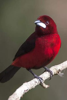 Most Beautiful Birds, Pretty Birds, Exotic Birds, Colorful Birds, Animals And Pets, Cute Animals, Bamboo Art, Buddha Meditation, Kinds Of Birds