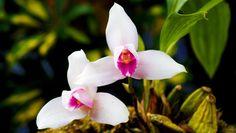 Orquigonia en Cobán es una reserva natural privada que funciona como un parque ecológico para conocer más acerca de las orquídeas en Guatemala.
