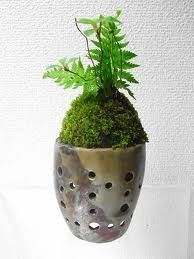 moss planter with holes