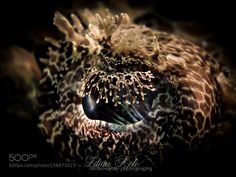 SOUL by LilianKoh #nature #photooftheday #amazing #picoftheday #sea #underwater