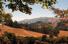 Sonoma Wine Country, California, USA