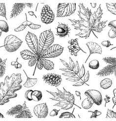 autumn seamless vector pattern with leaves berries fir cones nuts mushrooms and acorns. Illustration Art Dessin, Botanical Illustration, Vector Illustrations, Vektor Muster, Flax Flowers, Architecture Art Design, Plant Vector, Coloring Book Art, Leaf Drawing