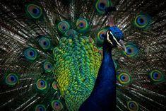 Africa, Bird, Nature, Photography, Animals, Naturaleza, Photograph, Animales, Animaux
