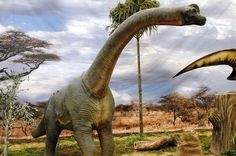 Scientists say they have found a new dinosaur species, nicknamed the Sibirosaurus, which could have grown to tall. Pictured: a Brachiosaurus Dinosaur Fossils, Dinosaur Art, Dinosaurs Extinction, Dinosaurs Live, Largest Dinosaur, Hanging Photos, Photo Hanging, Jurassic Coast, Prehistoric Creatures