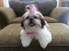 My precious baby girl Lily.