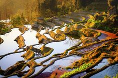 https://flic.kr/p/k5AKuW | Yuanyang Rice Terraces (UNESCO World Heritage) | Yuanyang Rice Terraces, located on the southern slopes of Ailao Mountain in Yuanyang County (part of Honghe Hani Autonomous Prefecture) and located in the south of Yunnan Province of China has been a masterpiece of the ingenuity of the Hani people for generations. Southern Ailao Mountain, with this typical tiered landscape, is famed for its unique frontier scenery. The Hani people's ancestors came to this steep…