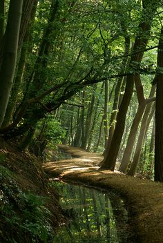 "Forest Paths by ajn elemans: ""The Ents loved the great trees; and the wild woods, and the slopes of the high hills; and they drank of the mountain-streams, and ate only such fruit as the trees let fall in their path; and they learned of the Elves and spoke with the Trees."" —J.R.R. Tolkien, The Two Towers, Book 2, Chapter 4. #Forest #Photography #Tolkien"