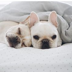 Well it's time for bed  hope you have all had a Pawsome day?! Snuggle up like the gorgeous @piggyandpolly Sleep tight   By PiggyAndPolly by harperandhugo