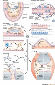 Matrix metalloproteinase inhibitors as therapy for inflammatory and vascular diseases