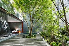 door Suzanne de Boer. Een solitaire Japanse esdoorn (Acer palmatum) zorgt voor groen en rust in de binnentuin. Deze bomen geven prachtige schaduwen. Het blad filtert het licht op een subtiele manier. Door de glazen 'bakstenen' is de tuin volledig afgesloten van de straat, maar komt wel veel licht binnen. Aan de bovenkant is de ruimte open.  designdautore.blogspot.it/
