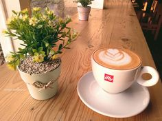 Illy coffee . Tulip flower ..