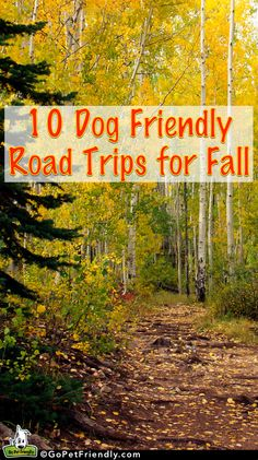 GoPetFriendly.com's 10 Dog Friendly Road Trips for Fall | Take Paws - The official pet travel blog of GoPetFriendly.com