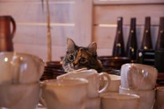 Native American Astrology, Totems, Coffee Travel, Coffee Shop, Pottery, Events, Friends, Cats, Tableware