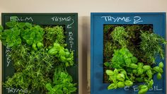 DIY Hanging Herb Garden from @kennethwingard!