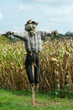 Espantapájaros protección de un campo de maíz - foto de stock