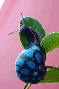 A blue snail! So cute.