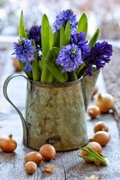 Tinker Spring Decor – 33 Beautiful DIY Garden Ideas for You – Flowers Flowers Spring Bulbs, Spring Blooms, Spring Flowers, Fresh Flowers, Beautiful Flowers, Purple Flowers, Draw Flowers, Flowers Nature, Simply Beautiful
