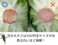 Japanese Food, Cabbage, Knowledge, Cooking Recipes, Vegetables, Foods, Meal, Recipes, Japanese