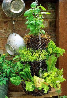 Herb Garden In Kitchen, Diy Herb Garden, Garden Trellis, Garden Pots, Garden Ideas, Herbs Garden, Garden Bed, Hanging Fruit Baskets, Hanging Herbs