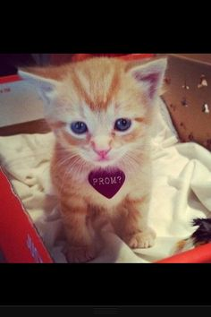 Getting asked to prom like this? And getting a kitty... ADORABLE!