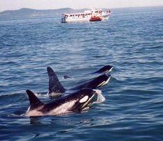Orcas Island, Pacific Northwest
