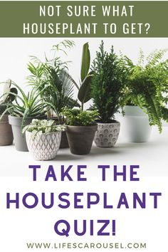 Not sure which type of houseplant to get? Take this houseplant quiz to find your PERFECT match! Answer these easy questions to find the right plant for you! Colorful Plants, Green Plants, Potted Plants, Indoor Plants, Growing Vegetables Indoors, Types Of Houseplants, Easy Plants To Grow, Low Light Plants, Mosquito Repelling Plants
