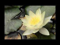 Relaxing sounds with chants Inner Peace, Zen, Garden Ideas, Music, Plants, Musica, Musik, Flora, Muziek