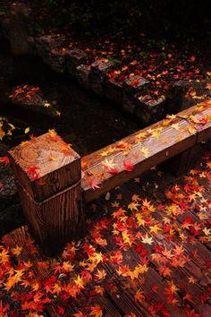 星降る公園 red momiji, japan