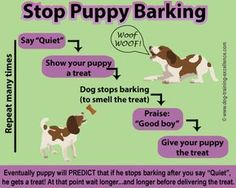 Stop puppy barking, teach your puppy to be quiet http://dogcoachinggenius.com/