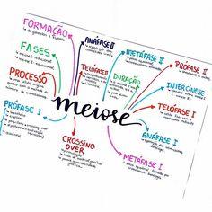 Mental Map, Study Cards, Study Organization, Medical Anatomy, Lettering Tutorial, School Notes, Study Inspiration, Studyblr, Study Notes
