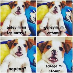 Napcan? 😃 #Beycon
