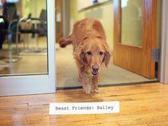 Domestic Beast • Beast Friends: Bailey