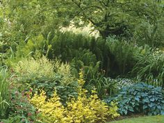 Foliage Garden  Foliage in a range of shades from green to gold brings visual drama to this garden.