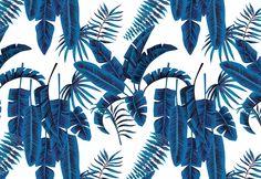 Grande Palm Banana SPARKK