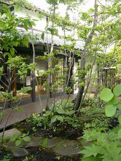 Japanese side garden