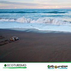 El desove de las tortugas marinas es uno de los espectáculos más increíbles de la naturaleza ¡Visita Centroamérica y se parte de este espectacular show!!