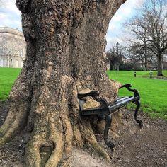 A árvore que comeu o banco! The tree that ate the bench.