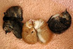 Selma, Hubie, Rhoda, Francine and Lucinda Darling by *lalalaurie, via Flickr